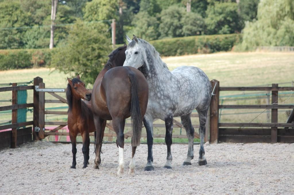 The Horses - Bilbo, Tarber & Harry